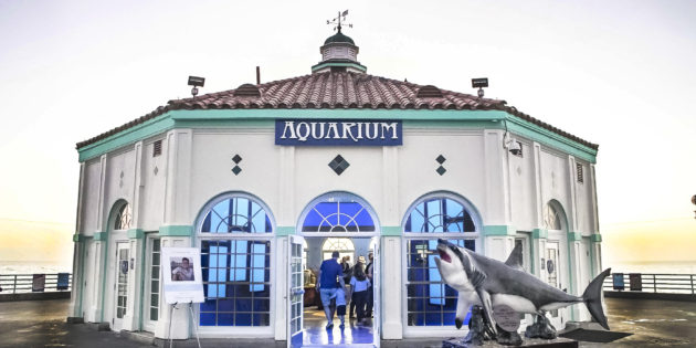 SKECHERS PRESIDENT MICHAEL GREENBERG REVIVES THE ROUNDHOUSE AQUARIUM AT CALIFORNIA'S MANHATTAN BEACH PIER